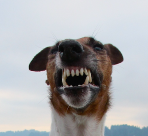 a much more scary dog's teeth