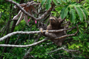 Jim is a sloth, he never learned how to be a good bdc rep